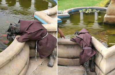 Пес у монастирі