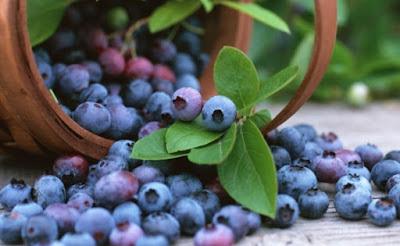 11 Manfaat Buah Blueberry untuk Kesehatan