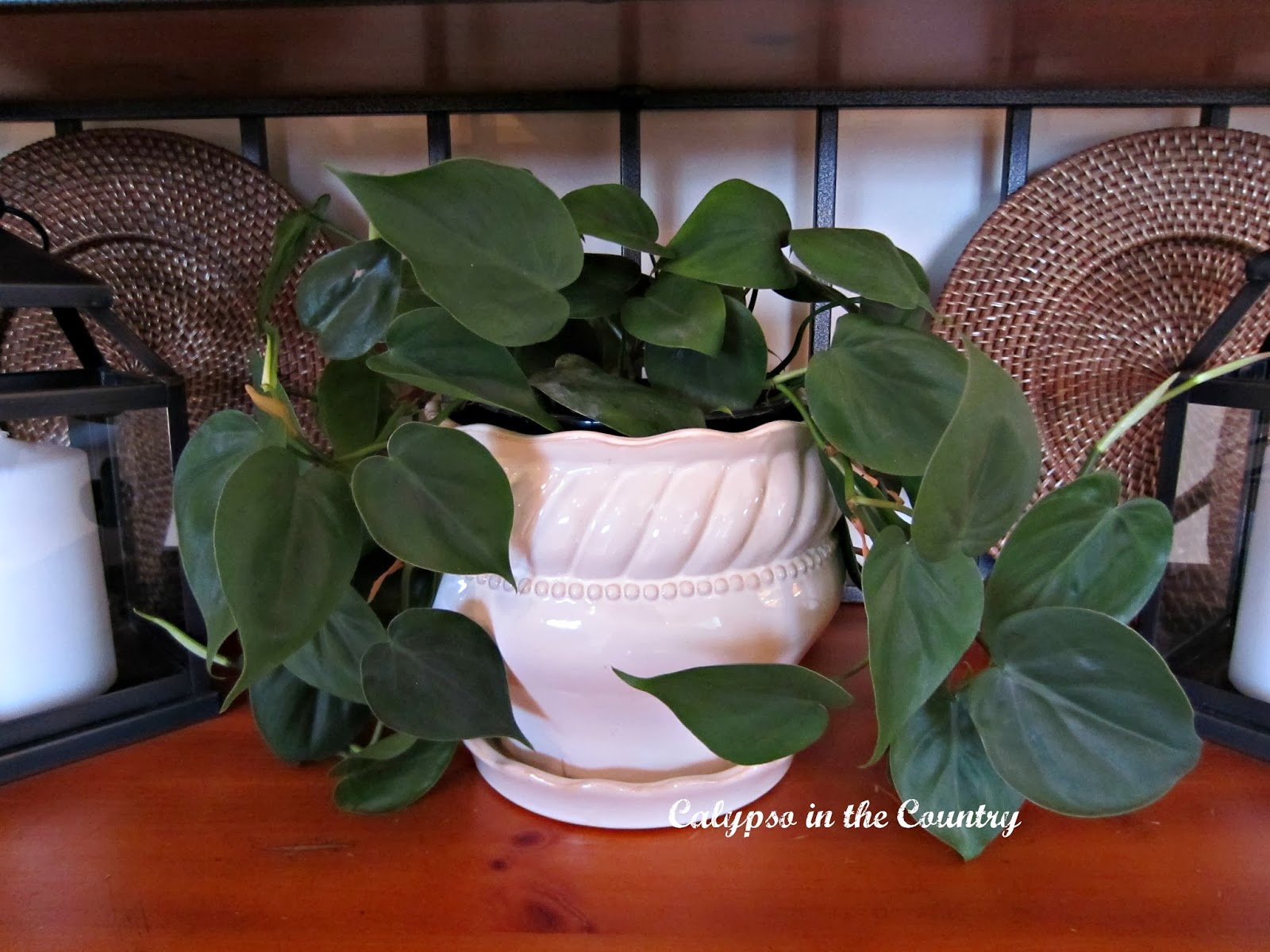 Houseplant in white pot