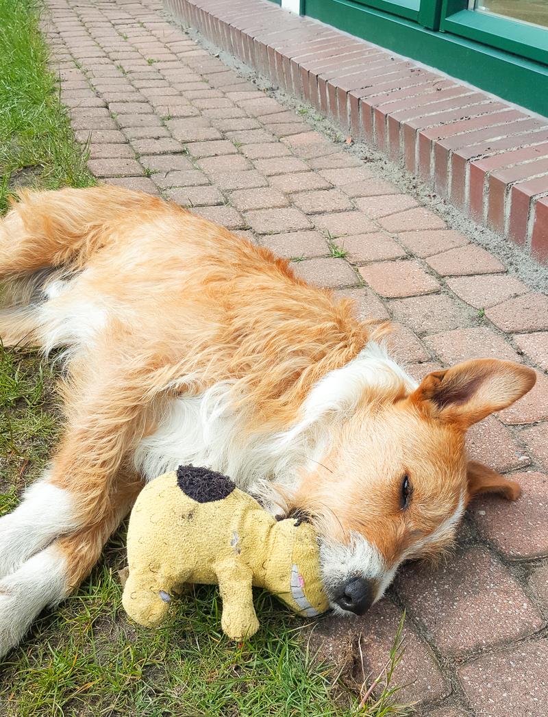 Hund Atti sucht liebevolles Zuhause | Herz für Ungarnhunde