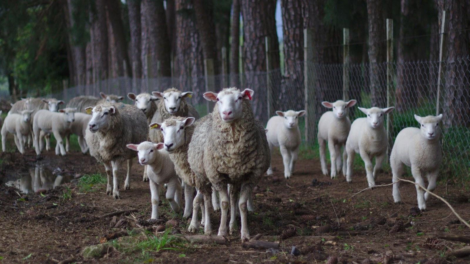 घर पर अगर आप किसी जीव को पाल रहे है तो उसे कभी भी कसाई को न बेचे
