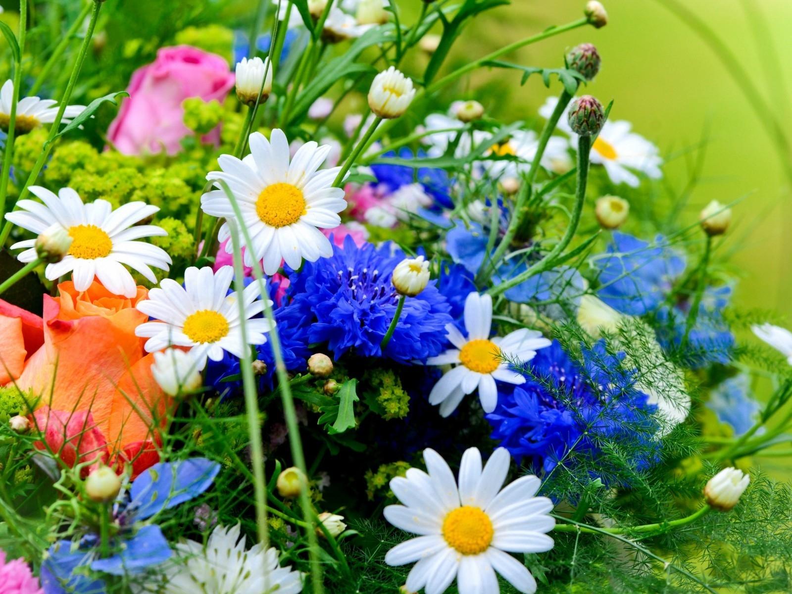 BANCO DE IMGENES 12 fotos de flores preciosas en varios colores