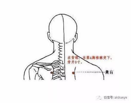 背部穴道圖膏肓 - 背部穴道膀胱經膏肓 | Source:zhidao.baidu.com/question/589120261230127685.html