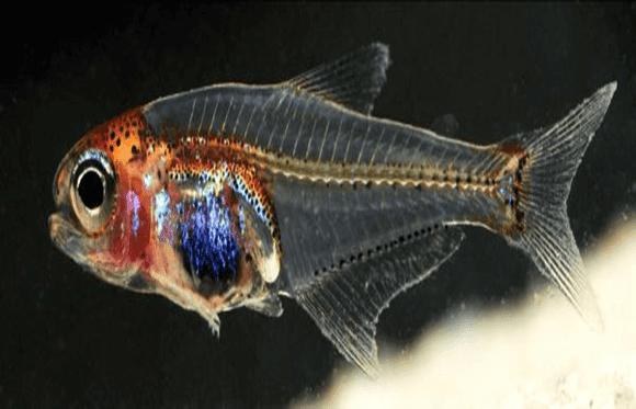 Tipo de peixe