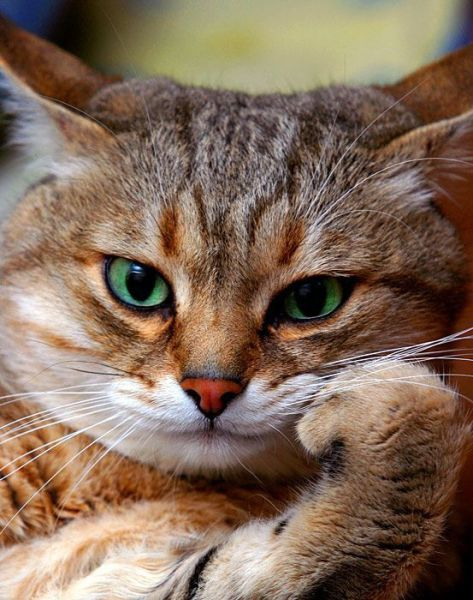 Cute Funny Cat Pictures With Different Moment  Pictures