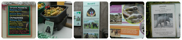 Chester Zoo Educational Displays