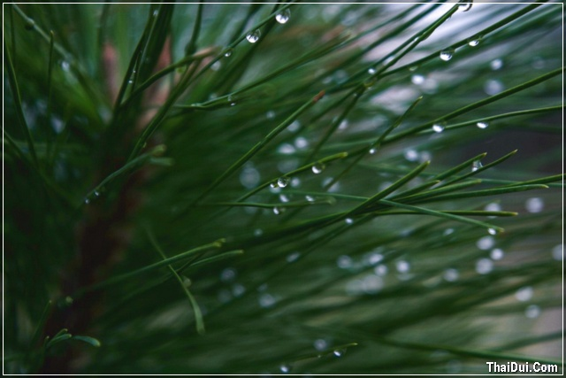 ảnh giọt mưa đọng trên lá