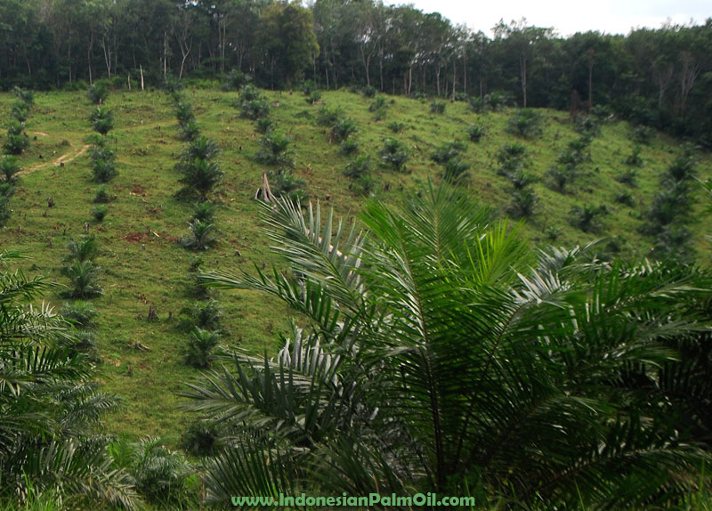 Eagle Plantation to boost CPO output with new plants