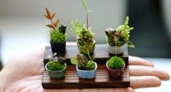 Inilah Bonsai Mini Dari Jepang Yang Lucu Dan Imut