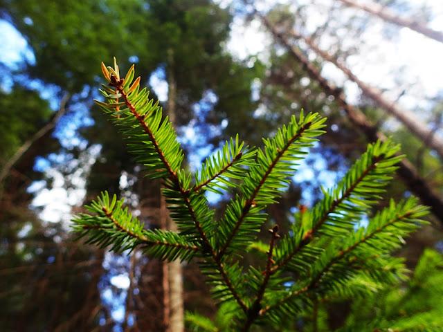 Kolorystyka w sumie już wiosenna, chociaż gałęzie są zielone cały rok