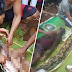 (Video) Ibu kepada 2 orang anak, ditelan ular