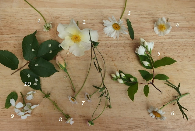 White flowers from the garden this June