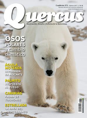 Quercus 372 osos polares