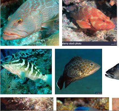 Nama Ikan Laut Karang
