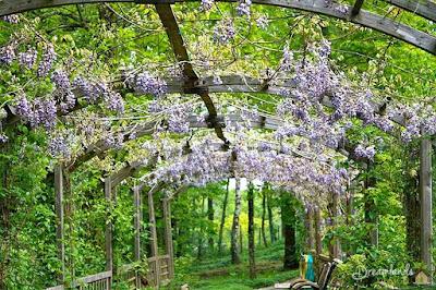 Pergola garden arbors