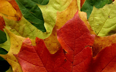 Leaves Macro Widescreen HD Wallpaper