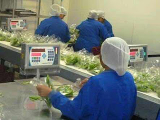 New Job Vacancy – Vegetable Packers Wanted in Canada | Apply Now!