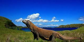 KOMODO ISLAND BECOMES INDONESIA'S INTL TOURIST DESTINATION