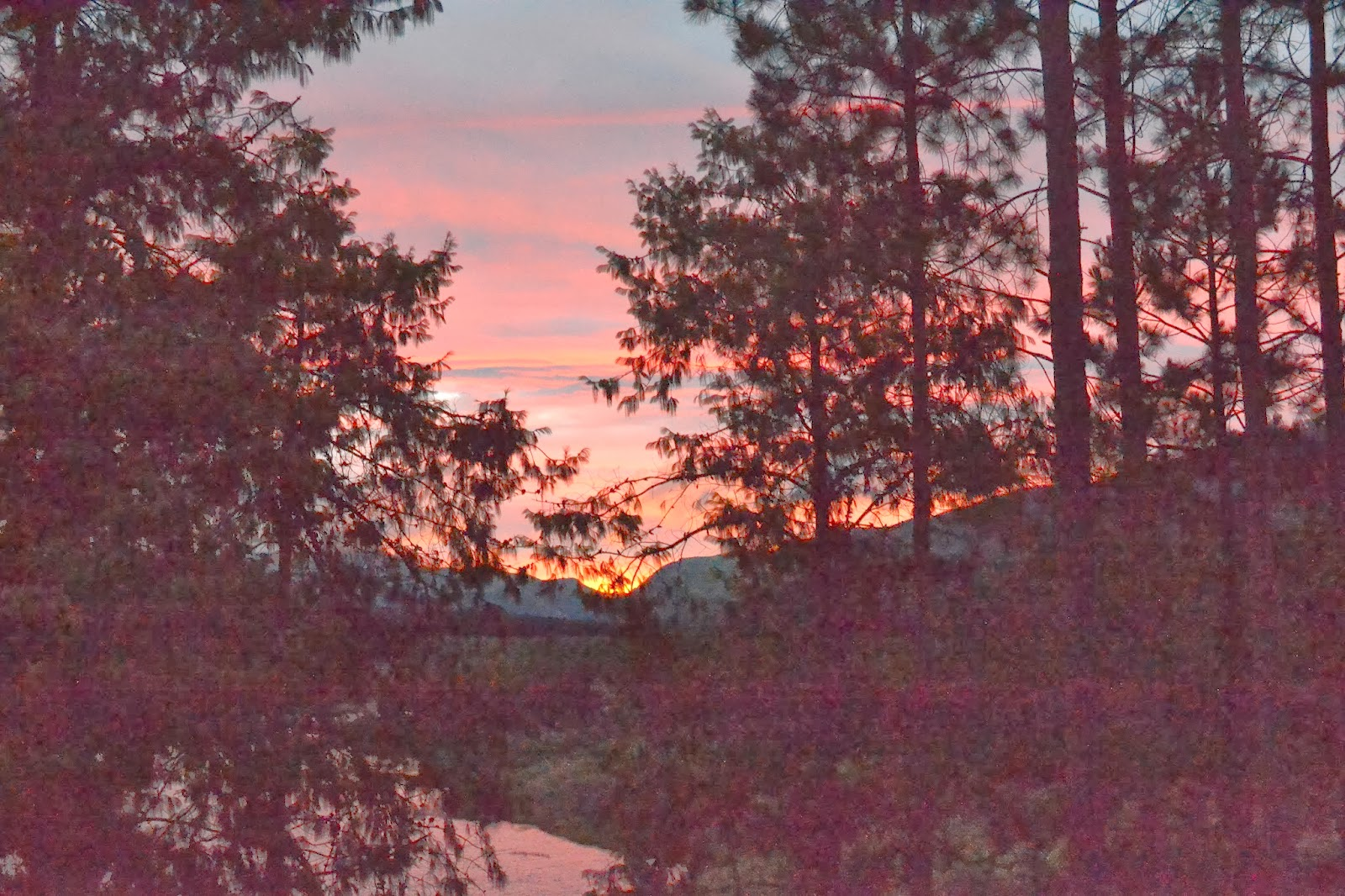 Sunset through the trees red sky