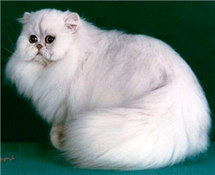 Lovely World Cat Jenis Jenis Kucing