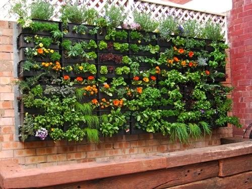 contoh vertical garden