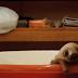 Leňochod–milé to zvieratko