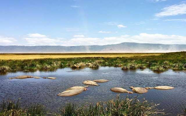 Explore the natural zoo of the Ngorongoro Crater