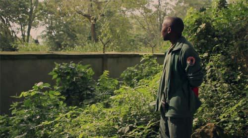 Andre Bauma in Virunga