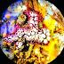 প্লাস্টিকে ভর করে মহাদেশ পাড়ি দেয় সামুদ্রিক প্রজাতি