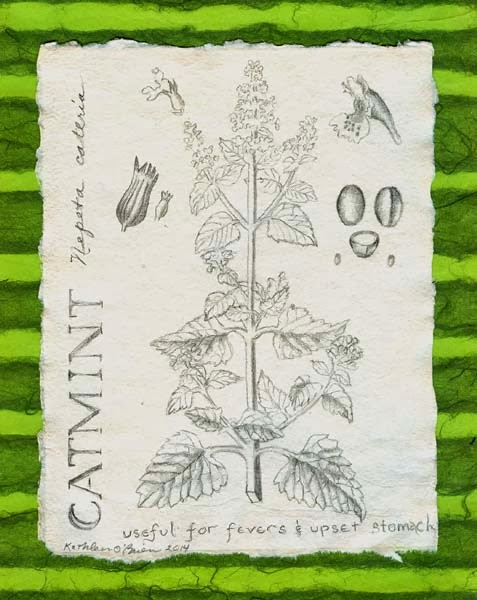 ©Kathleen O'Brien, Catmint, drawing, 7x5""