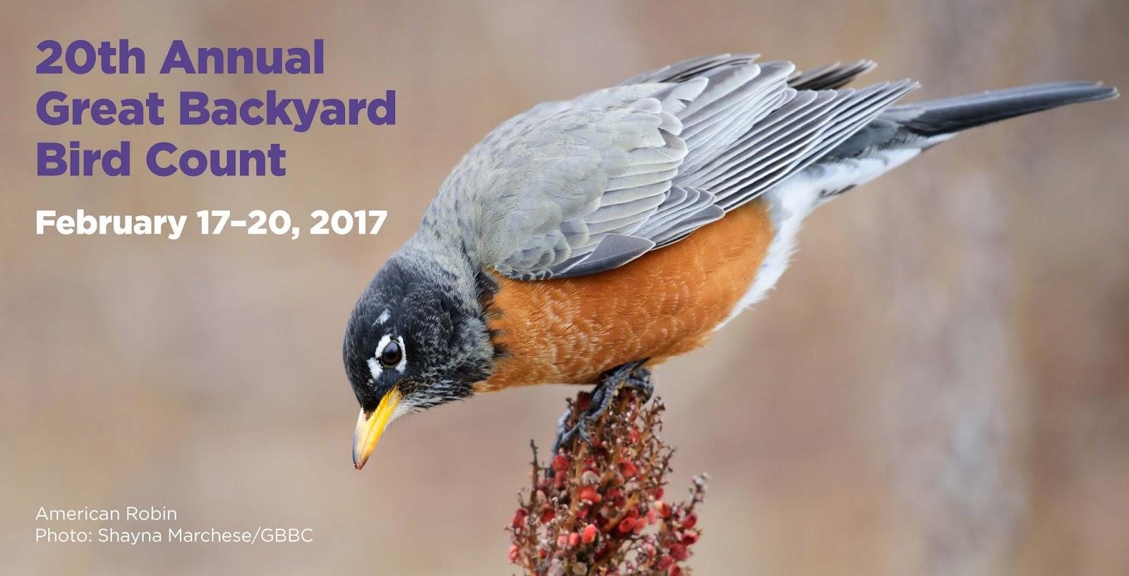 bethlehem birdman 39 s tips backyard bird count is february 17 20