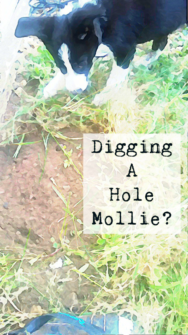 Digging A Hole Mollie?