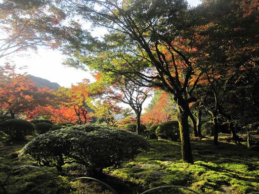 秋冬の紅葉
