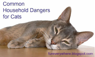 Protect your cat from these common household dangers.
