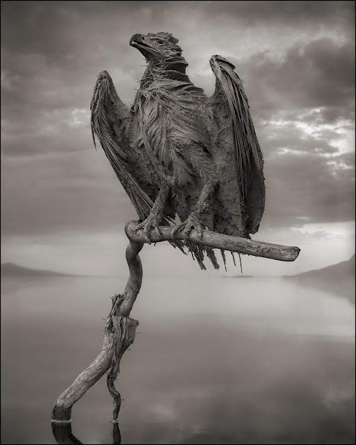 águia-múmia-lago-natron