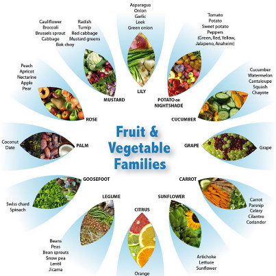 Fruit and vegetable families also cooking on  budget rh pattyandersonsblogspot