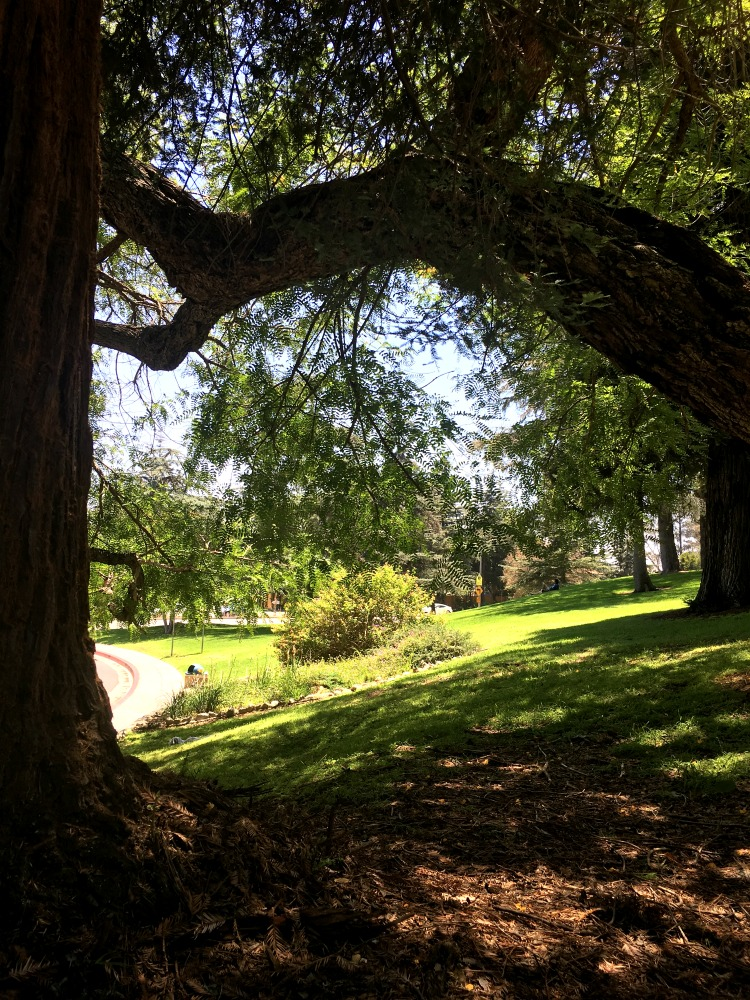 Picnic in Griffith Park Los Angeles California on a Summer Afternoon