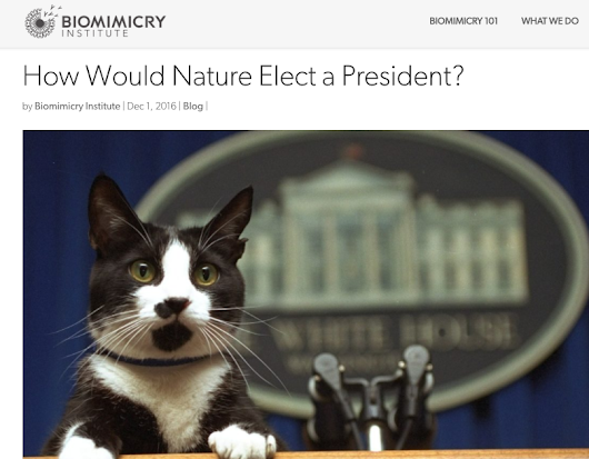 How Would Nature Elect a President?