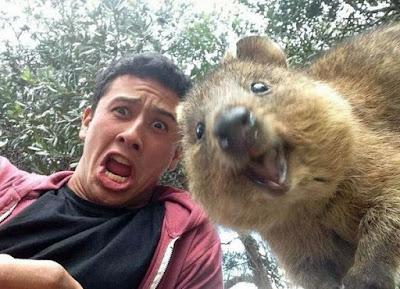 Witzige Tierbilder - In Kamera lächeln