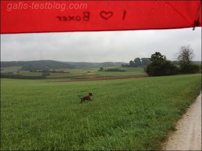 Spaziergang im Regen mit Boxer Amy