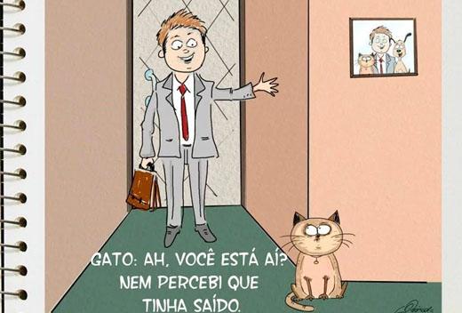 recepção gato