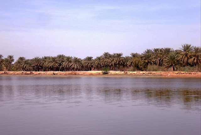 Palm groves of Khuzestan by the river.