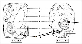 Biology Multiple Choice Quizzes: Plant Cell and Animal