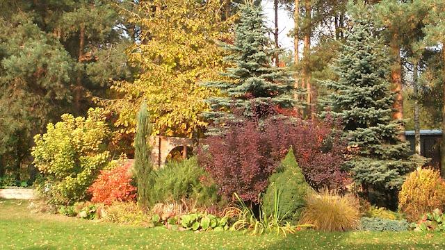 barwy jesieni, przebarwienia liści