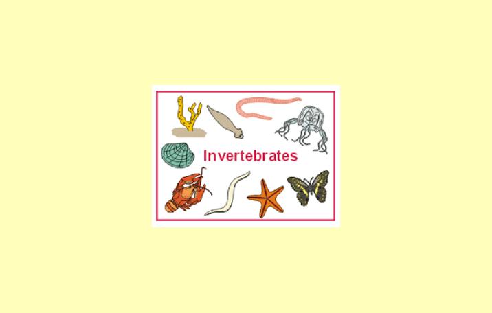 65+ Gambar Hewan Avertebrata Dan Vertebrata Beserta Ciri Cirinya Terbaru