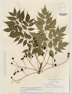 Cara Membuat Herbarium  Cara Mudah