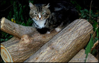 Cat on wood pile