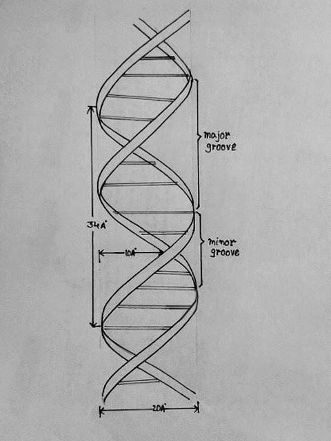 Dna Easy Drawing : drawing, April