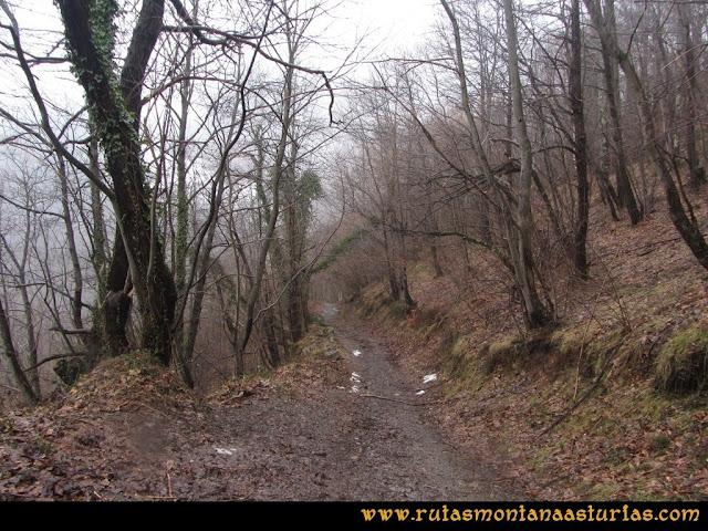 Cueto Ventoso: Sendero entre el bosque