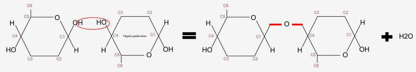 starch and glucose relationship